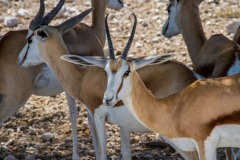kruse_namibia2015_098