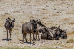 kruse_namibia2015_114