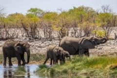 kruse_namibia2015_137