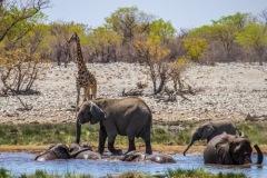 kruse_namibia2015_152