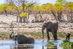kruse_namibia2015_155
