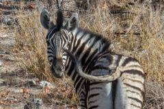 kruse_namibia2015_201