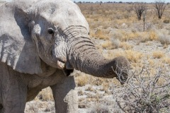 kruse_namibia2015_230