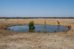 kruse_namibia2015_240