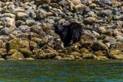 bearwatching-2016_004