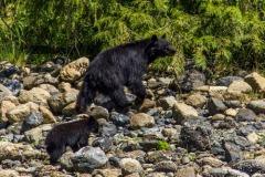 bearwatching-2016_020