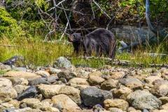 bearwatching-2016_022