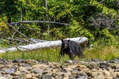 bearwatching-2016_024