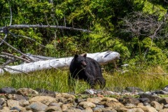bearwatching-2016_025
