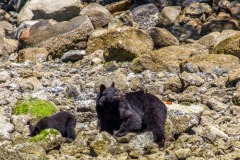 bearwatching-2016_029