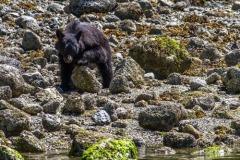 bearwatching-2016_044