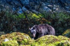 bearwatching-2016_053